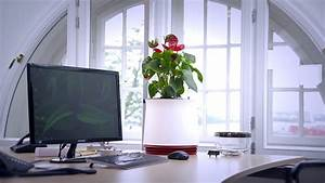 Pflanzen Luftreinigung Schlafzimmer : airy hochwirksame luftreinigung durch pflanzen youtube ~ Eleganceandgraceweddings.com Haus und Dekorationen