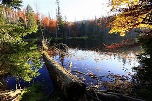 Bilder Vom Wald : wandern im nationalpark bayerischer wald informationen zu wanderungen im nationalparkgebiet ~ Yasmunasinghe.com Haus und Dekorationen