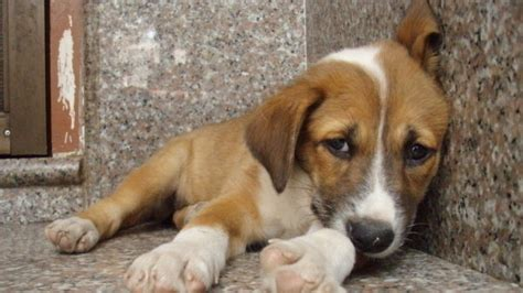 petition president   united states stop animal