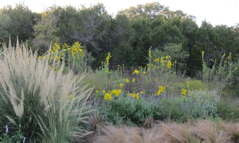 What Is Texas Native Plant Week?  Texas Native Plant Week
