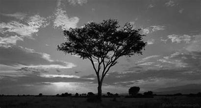 Landscape Savanna Africa Gifs Giphy Poetry Re