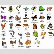 Igbo Names For Animals  West Africa  English Vocabulary, Learn English, English Lessons