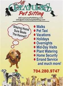 1000 images about pet sitting on pinterest pet sitting for Dog babysitting service