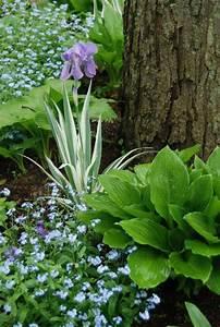Plantes Et Jardin : plantes d 39 ombre pour le jardin en 25 photos fascinantes ~ Melissatoandfro.com Idées de Décoration