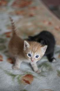 baby cats baby kittens wallpapers