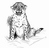 Leopard Coloring Pages Printable Colouring Cub Animals Cheetah Print Face Template Lepords Getcoloringpages Popular Lol Results Comments Trending Days Last sketch template