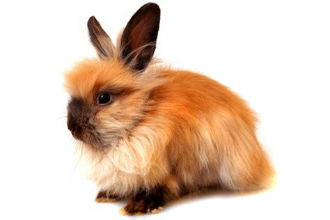 le de chevet lapin le de chevet lapin 28 images konijnen plaatje 187 animaatjes nl passions et partage les