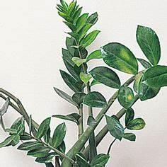 Grande Plante D Intérieur Facile D Entretien : quelles plantes d int rieur choisir pour une pi ce peu ~ Premium-room.com Idées de Décoration