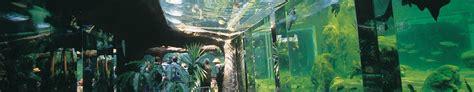 aquarium du p 233 rigord noir lascaux dordogne vos vacances