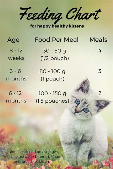 kitten food ideas  pinterest kitten treats
