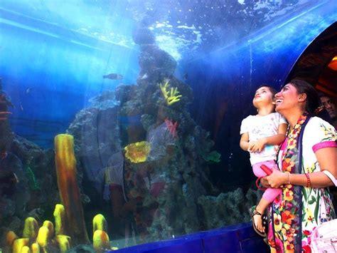 taraporewala aquarium mumbai a whole mumbai your week in pictures mumbai photos hindustan times