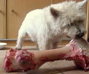 Que Donner A Manger A Un Ecureuil Sauvage : donner des os son chien oui mais toutouandyou ~ Dallasstarsshop.com Idées de Décoration