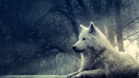 Wolf Desktop Wallpaper Hd by White Wolf Hd Wallpaper White Wolf Desktop Hd