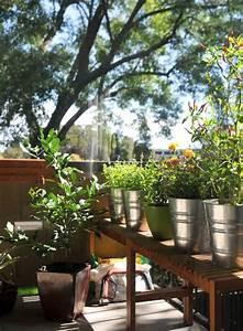 My Thai Herb Garden Summer 2013 Rachel Cooks Thai