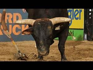 MONSTER MONEY BULL: Asteroid defeats Mike Lee (PBR) - YouTube