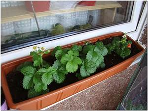 Erdbeeren Pflege Balkon : balkon fliesen holz pflege hauptdesign ~ Lizthompson.info Haus und Dekorationen