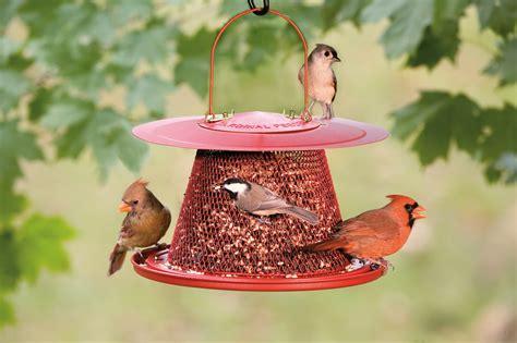 garden pergola attract cardinals   backyard