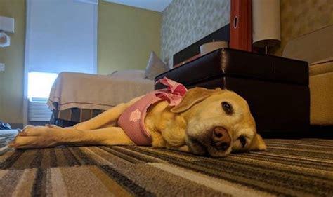 viesnīca palīdz suņiem adoptēties, ļaujot ilgtermiņa ...