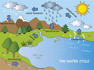 Our Precipitation And Water Cycle  How They Work And How
