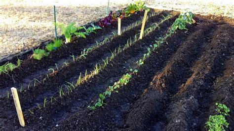 Gardening For Beginners by Vegetable Gardening For Beginners Decor Ideasdecor Ideas