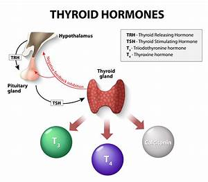 Thyroid Dcotor- Testing and Replacement Therapy by Thyroid ...