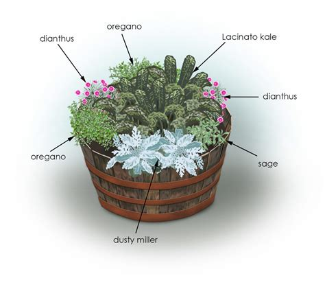 kale flowers herbs container garden bonnie plants
