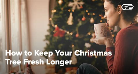 how to keep your christmas tree alive fresh green longer