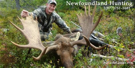 Guided Newfoundland Moose Hunting Trips
