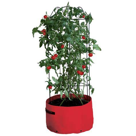 patio tomato planter climbing tomato patio planter haxnicks