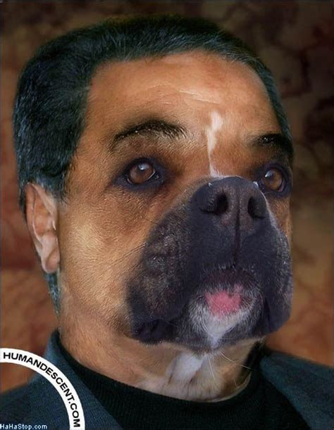 funny dog mans funny animals