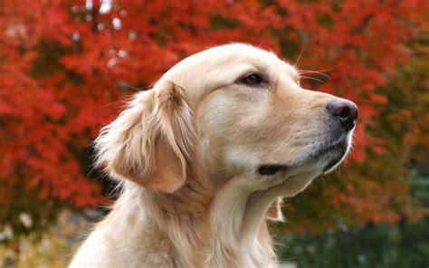 Beautiful Dog Hd Wallpapers