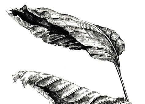 drawn leaf dead leaf pencil   color drawn leaf dead