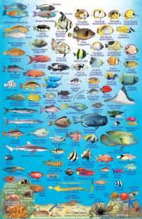 philippines fish card franko maps