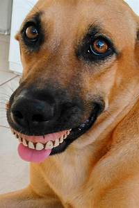 Doogy dentures: Pooch's owner left in fits of laughter as ...