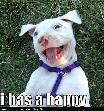 happy birthday pitbull ideas  pinterest