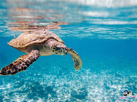 Aquatic Animals Wallpapers - aquatic backgrounds wallpapersafari