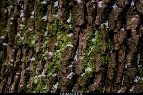 pflanzen bestimmen mit foto baumrinde mit moos foto bild pflanzen pilze