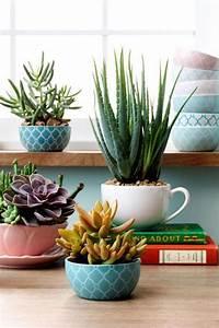 Plantes Grasses Intérieur : d corez avec les plantes grasses d 39 int rieur ~ Melissatoandfro.com Idées de Décoration