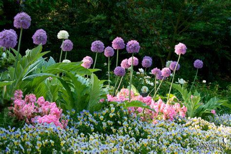 gardening tip of the week how to grow garlic marshall