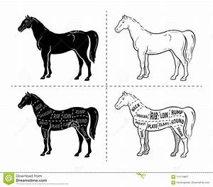 Scheme Of Cutting Horse Meat With Cutting Lines  Design