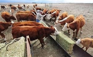 Feeding Antibiotics To Farm Animals May Worsen Climate