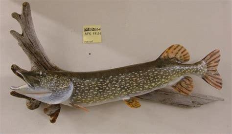 lake country fish  wildlife replicas