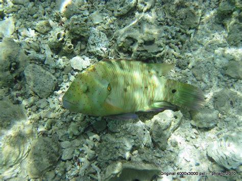 Fisch 2 Im Roten Meer Foto & Bild  Tiere, Wildlife