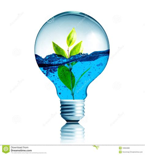 inside of a light bulb plant growing with water inside the light bulb stock photo