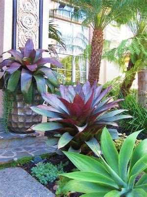 These Are The Giant Bromeliads I Was Thinking About As