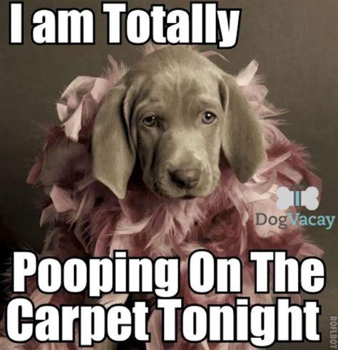 Funny Poop Memes - pooping dog meme w630 jpg