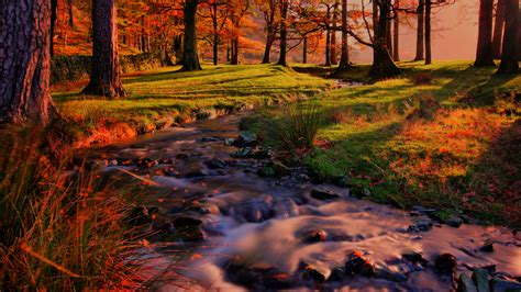 Android Hd Autumn Wallpapers by Beautiful Autumn Colors In The Forest 4k Ultrahd Wallpaper