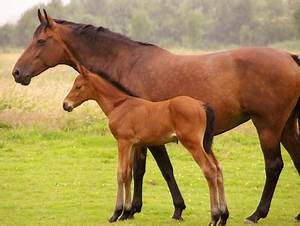 mother and baby horse | Conscious Lifestyles Radio