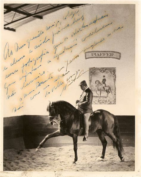 horse andalusian inspiration every discover