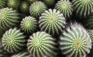 Come curare le piante grasse d inverno LEITV